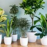 Migliorare la qualità dell'aria domestica con le piante: uno studio della NASA